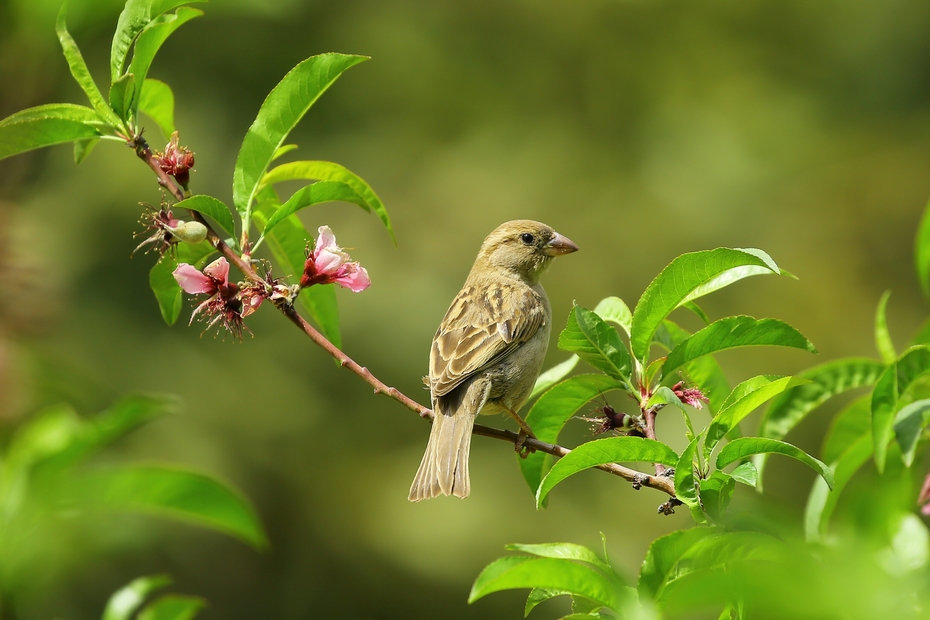 birdie on a branch
